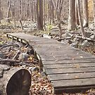 Sourland Mountain Trails by thesunsetkid