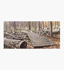 Sourland Mountain Trails Photographic Print