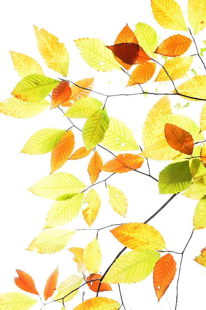 transparent fall by nzaluski