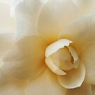 White Camellia Flower Detail by Skye Hohmann