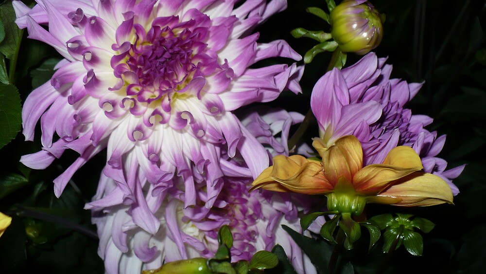 Dynamic Dahlias by ShantiMikel