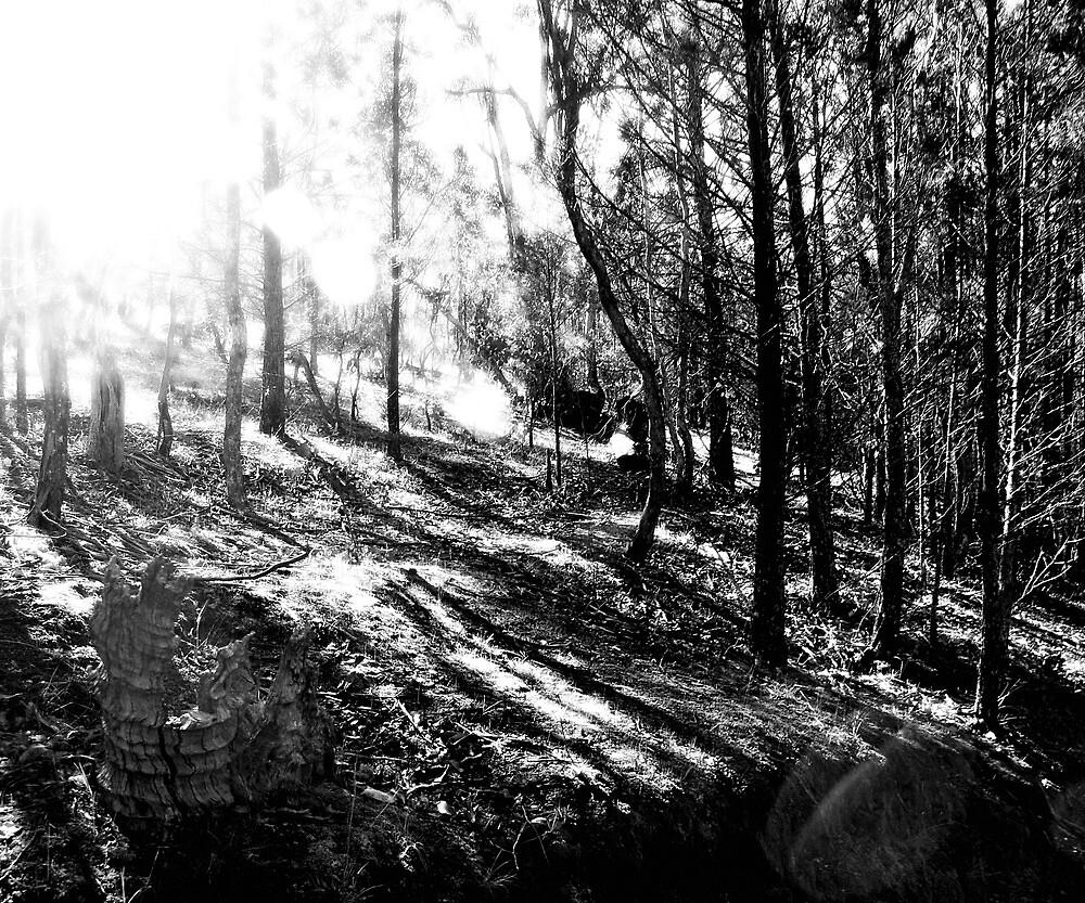 Landscape 3 by lseary