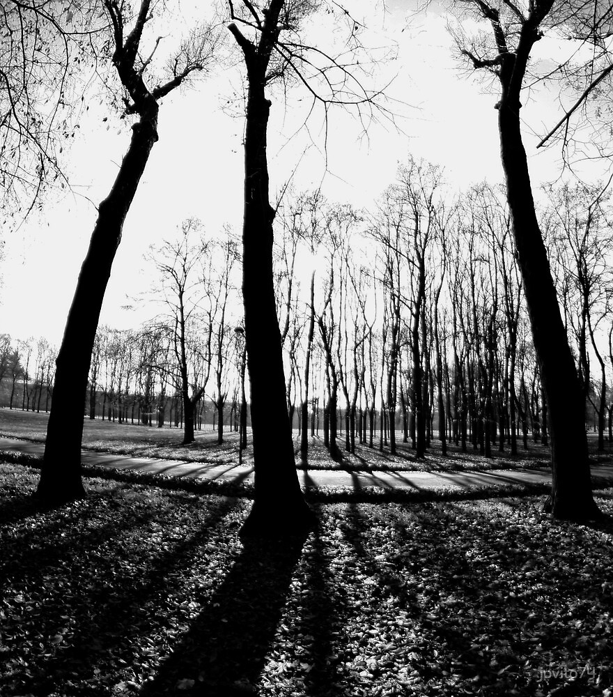 black & white by jovito74