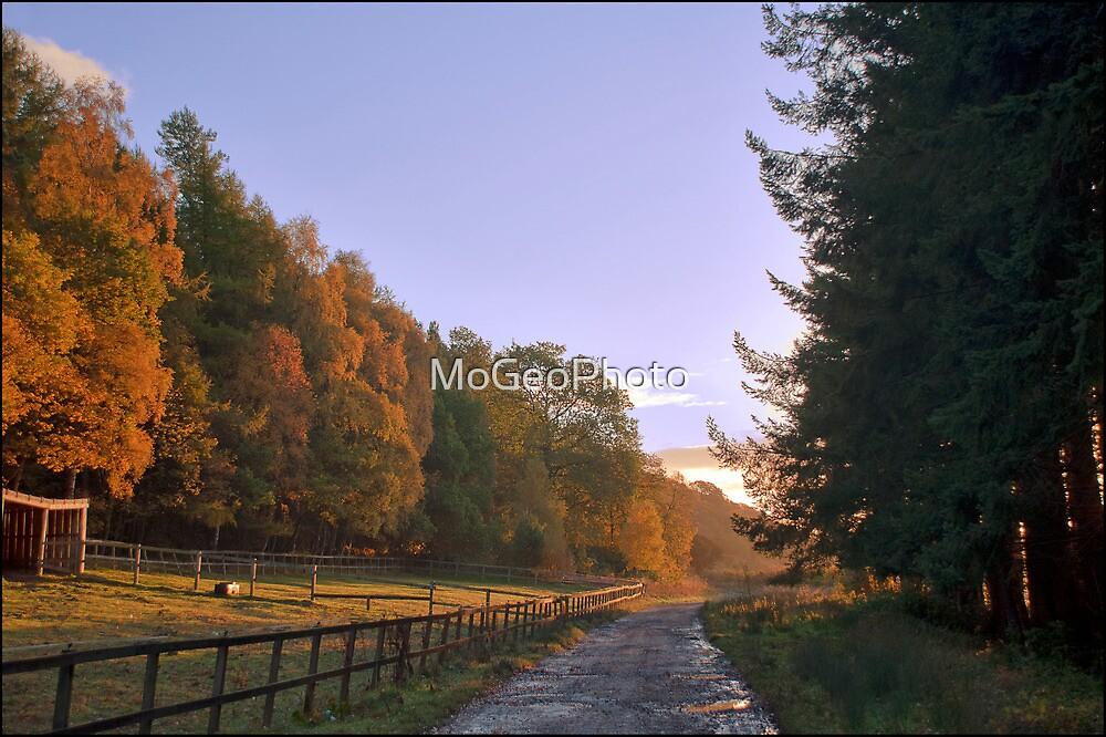 Harehope - (Early Morning) by MoGeoPhoto