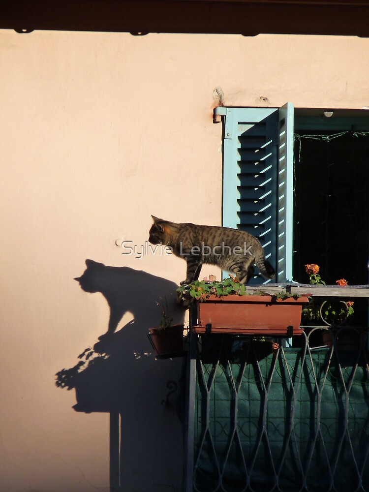 Cat on the balcony by Sylvie Lebchek