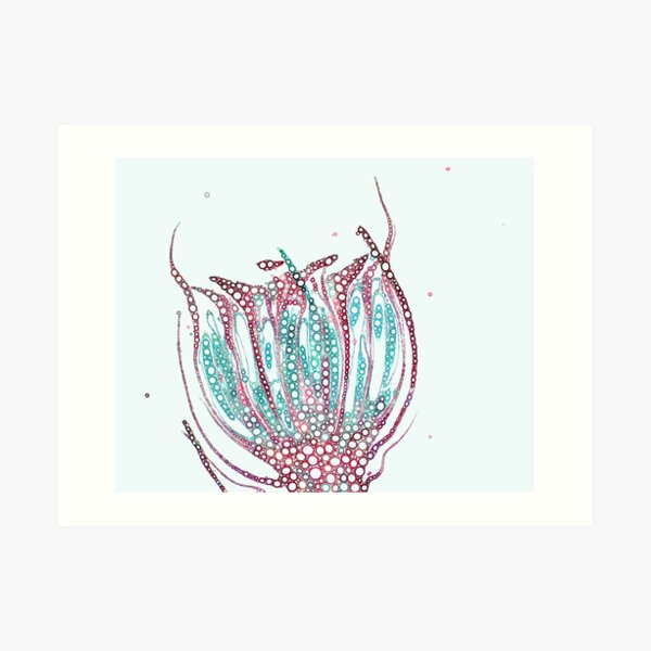 Bubbly Antheridial head Art Print