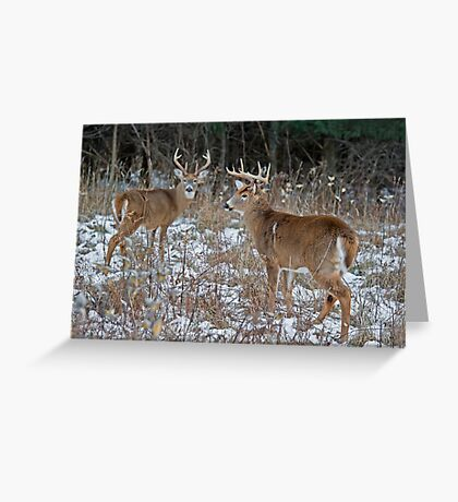 Two Bucks worth Greeting Card