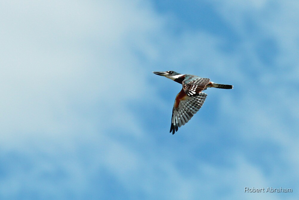 Noisy Bird by Robert Abraham