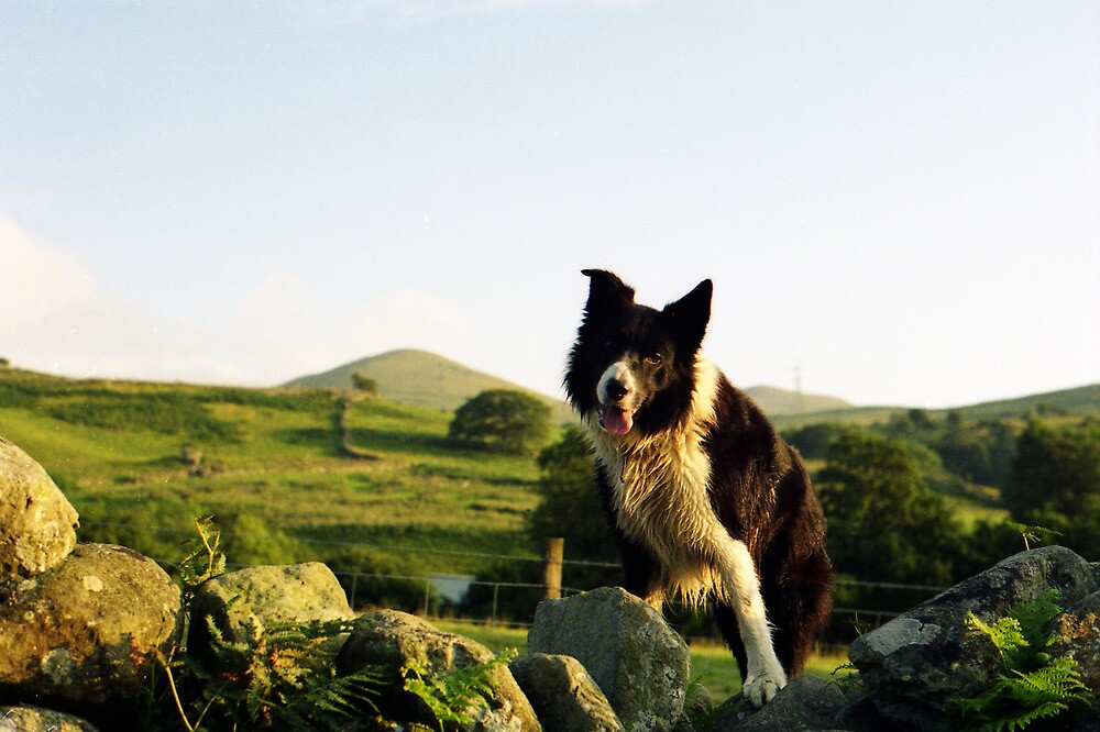 Among the Hills with Indy by Michael Haslam