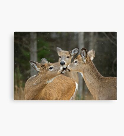 A Family Moment Canvas Print