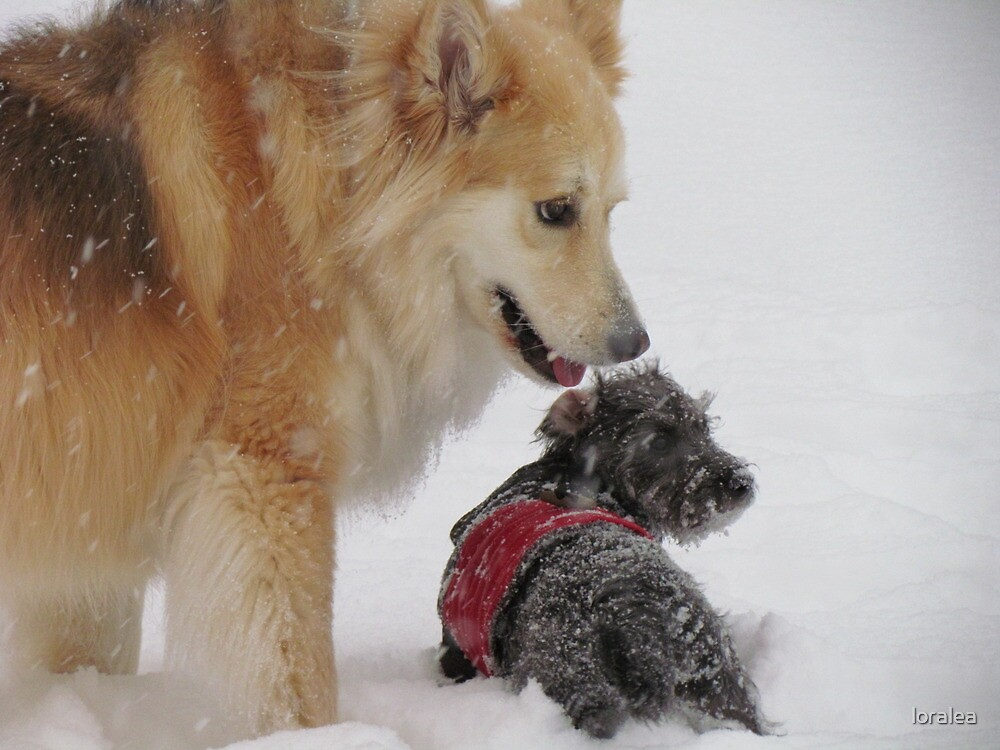 Best Pals in the New Snow by loralea