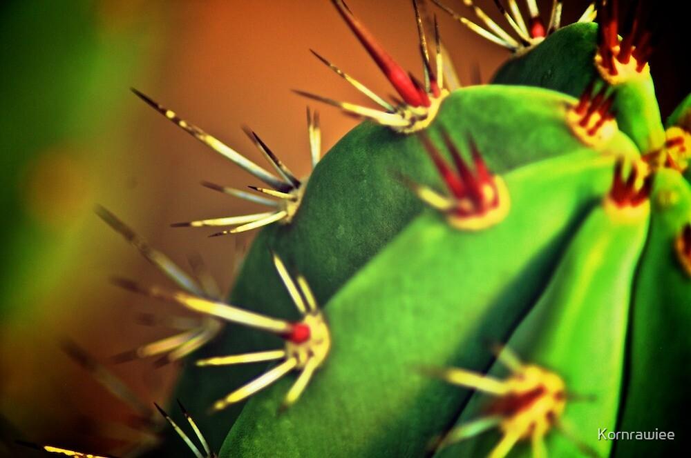 Cactus by Kornrawiee