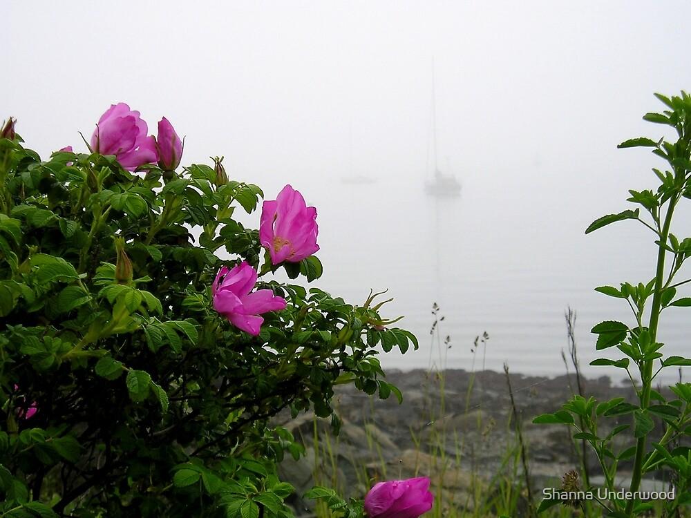 Sea Roses by Shanna Underwood
