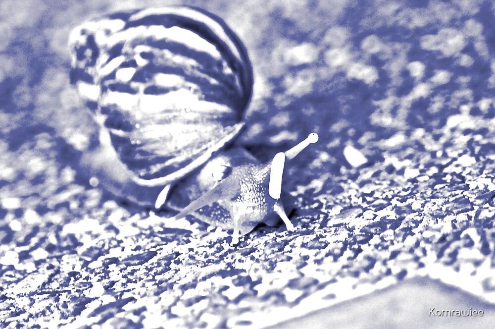 Blue snail.. by Kornrawiee