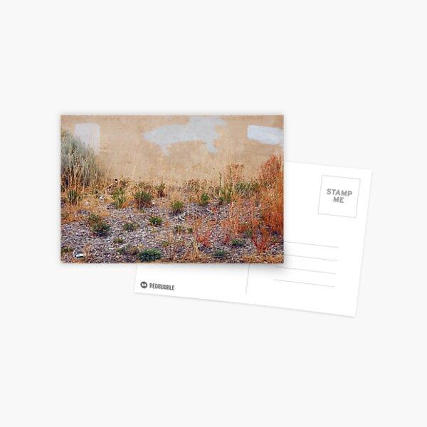 desert vista Postcard