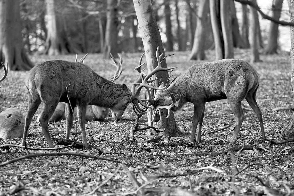 Red Deer at Wollaton Park by chou888