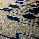 Paris - Dancing chairs shadow... Lhasa's Small song by 1morephoto