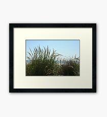 Narragansett Dunes- Beach Grass Framed Print