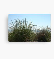 Narragansett Dunes- Beach Grass Canvas Print