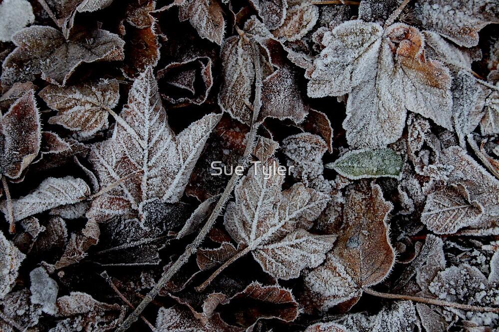 Frozen by Sue Tyler