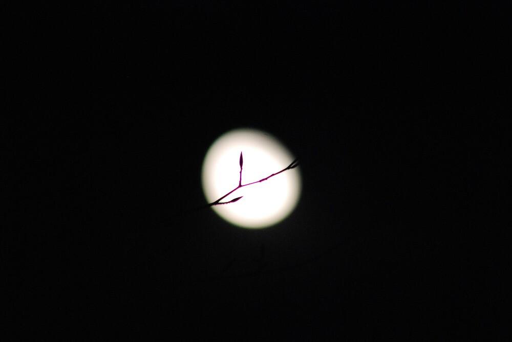 moon  by Sebastian Kaiser