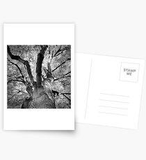 Tree From Below Postcards