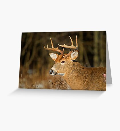 Profile of a Buck  Greeting Card