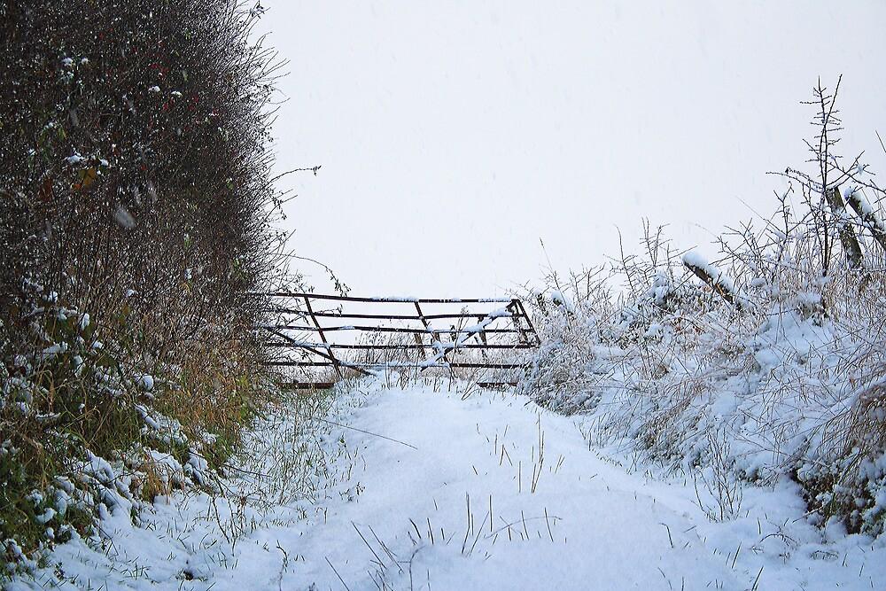 Snow Gate by Dave Godden