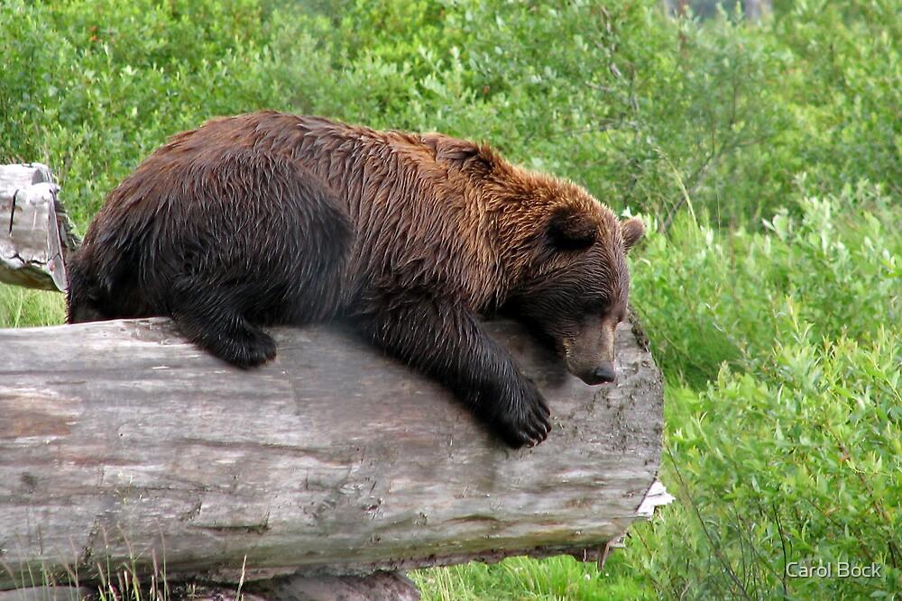 Hope I don't fall of this Log by Carol Bock