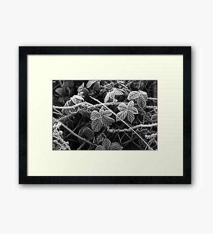 Frost & Thorns #2 Framed Print