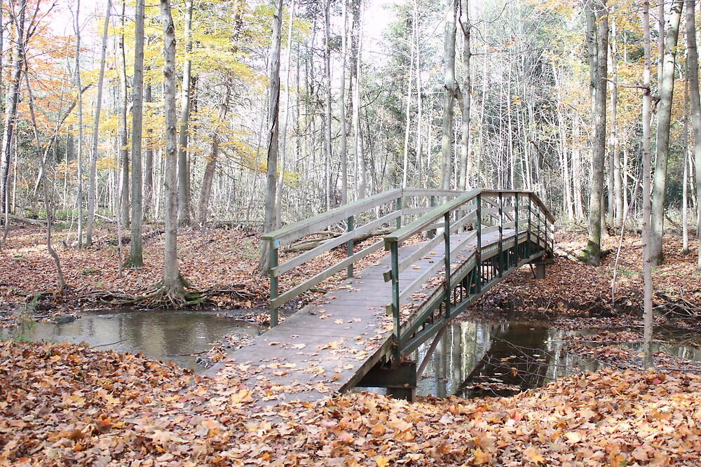 A Bridge To Nature's Beauty by Luann66