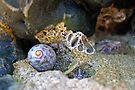 Snail and Shell by Matthias Keysermann