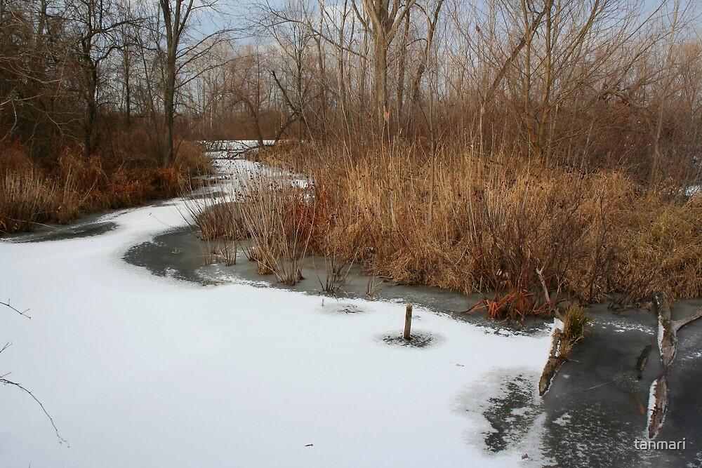 Winter Marsh by tanmari
