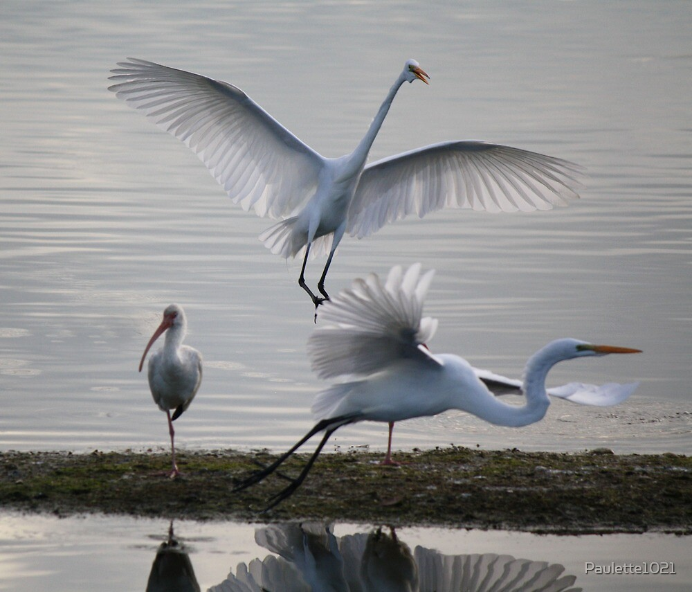 Great White Egret's and an Ibis by Paulette1021