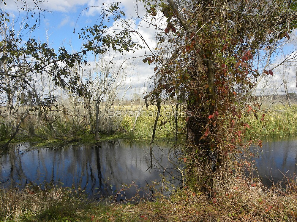 Brazos Bend by S Gibbs