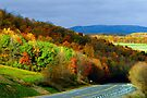 Fall Colors In The Back Mountain by Gene Walls