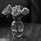 Roses by Sandra Guzman