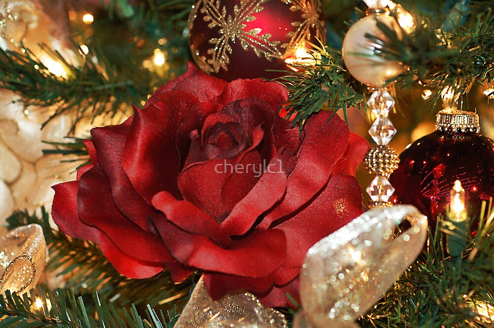 Christmas Rose by cherylc1