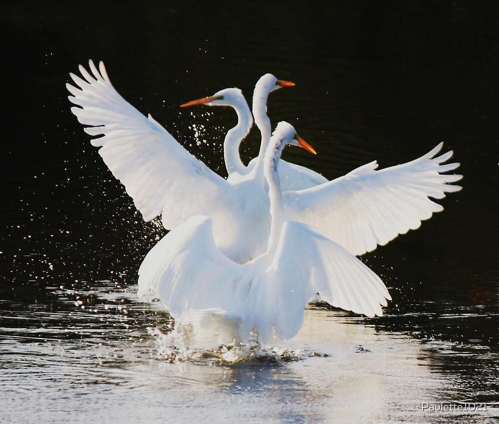 Flutter - Great White Egret by Paulette1021