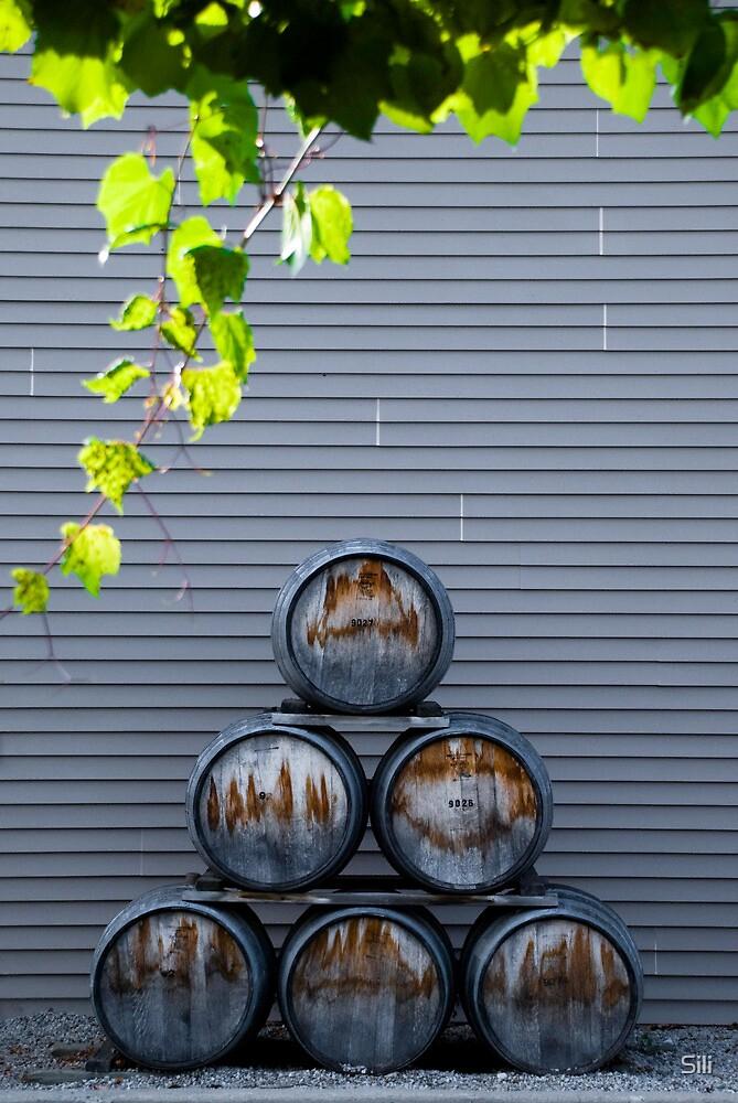 Wine Barrels by Sili