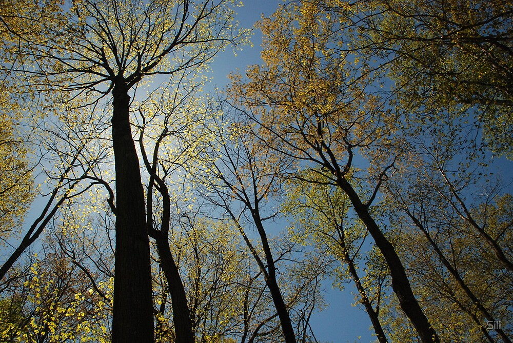 Trees of life by Sili