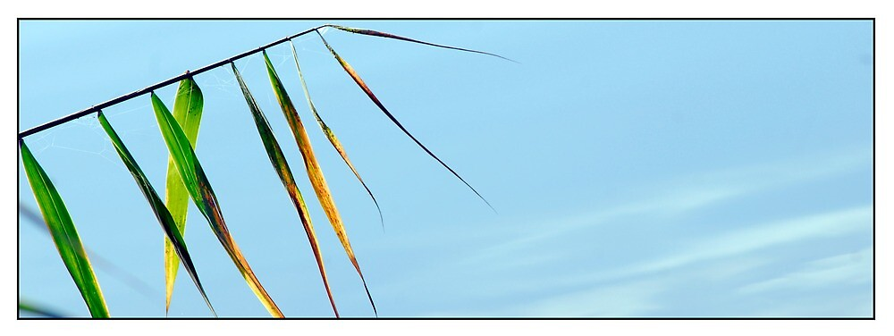 river reeds by stiddy
