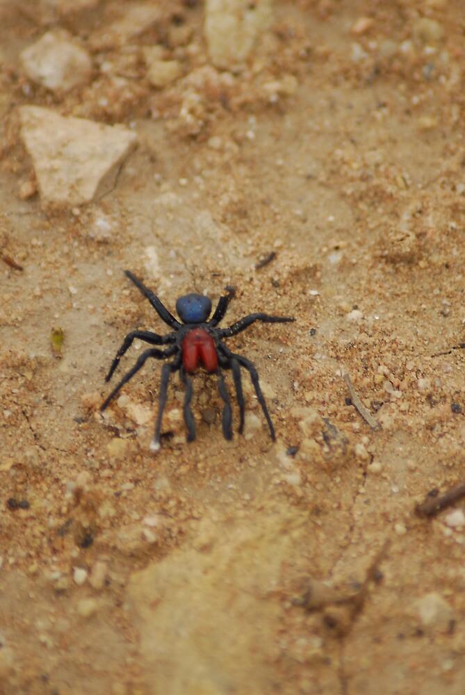 oz spider by stiddy