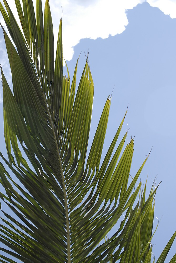 carribean palm by stiddy