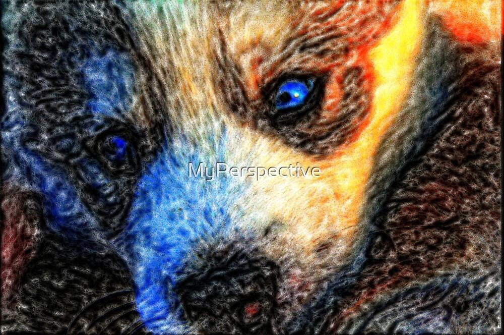 Husky puppy by MyPerspective