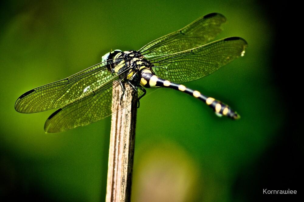 Wings by Kornrawiee