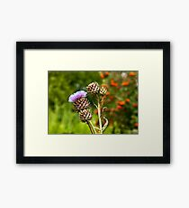 A Touch of Purple Framed Print