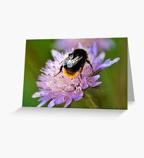 Collecting Nectar Greeting Card