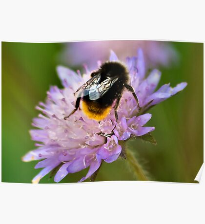 Collecting Nectar Poster
