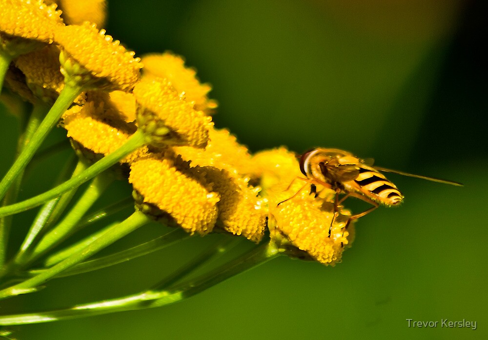 Seeking the Nectar by Trevor Kersley